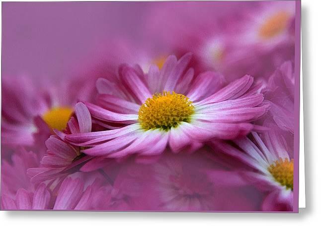 Macro Mixed Media Greeting Cards - Love In Every Petal Greeting Card by Georgiana Romanovna