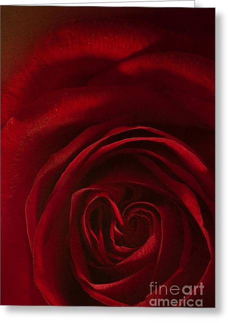 Rose Petal Heart Greeting Cards - Love in the Rarest Form Greeting Card by Margie Hurwich
