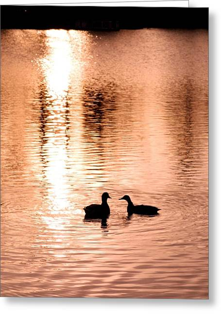 Sweating Greeting Cards - Love In Water Greeting Card by Hilde Widerberg