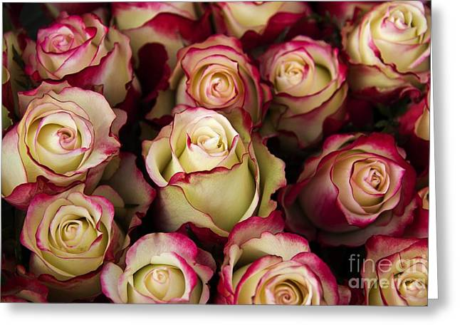 Neil Young Greeting Cards - Love Is A Rose III Greeting Card by Al Bourassa
