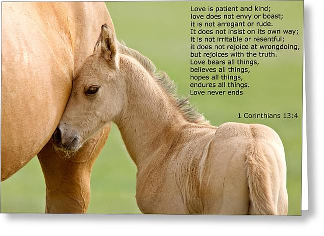 Runner Greeting Cards - love is gentle love is kind Horse and colt Greeting Card by Mark Duffy