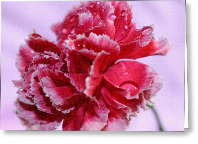 Pink Carnations Greeting Cards - Love Is In The Air Greeting Card by Krissy Katsimbras