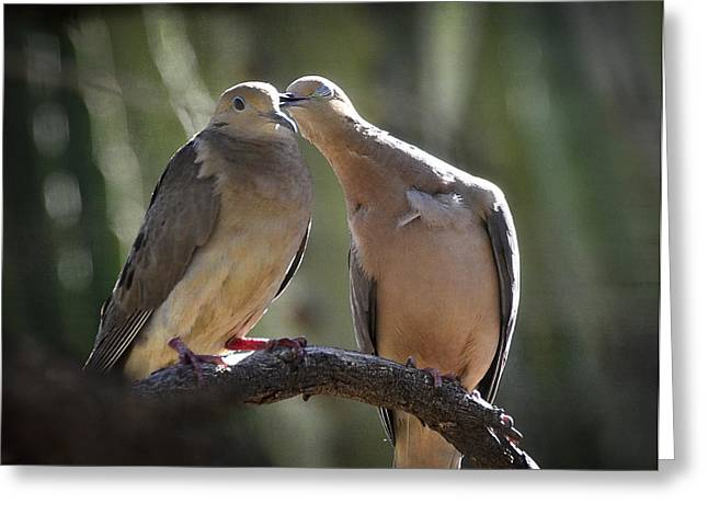Mourning Dove Greeting Cards - Love is in the Air  Greeting Card by Saija  Lehtonen