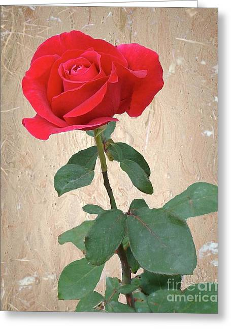 Love Is Like A Red Red Rose Greeting Card by Janette Boyd