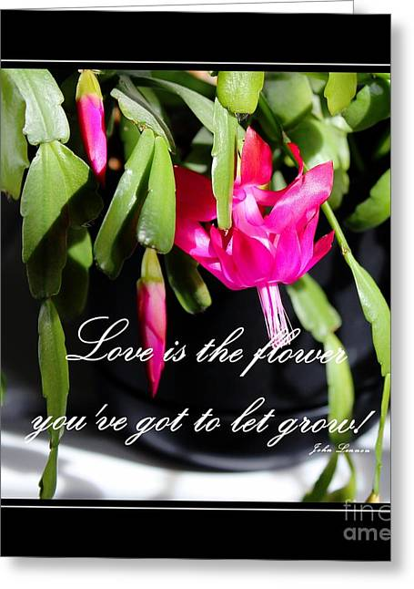 John Lennon Quote Greeting Cards - Love is the Flower Youve Got to Let Grow Greeting Card by Barbara Griffin