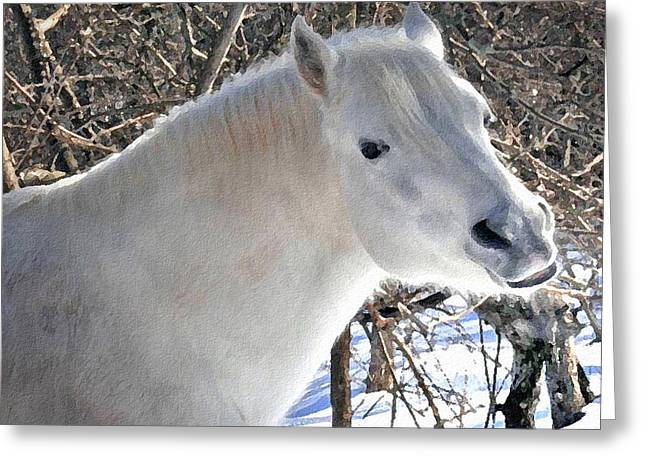 Paso Fino Stallion Greeting Cards - Love is...Paso Fino Stallion Smiles  Greeting Card by Patricia Keller
