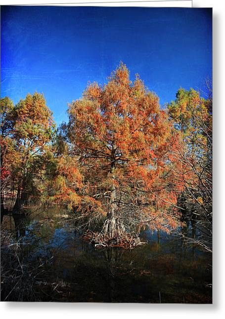Tree Roots Digital Art Greeting Cards - Love Me Longer Greeting Card by Laurie Search