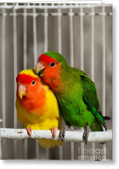 Best Selling Bird Art Greeting Cards - Love n Care Greeting Card by Syed Aqueel