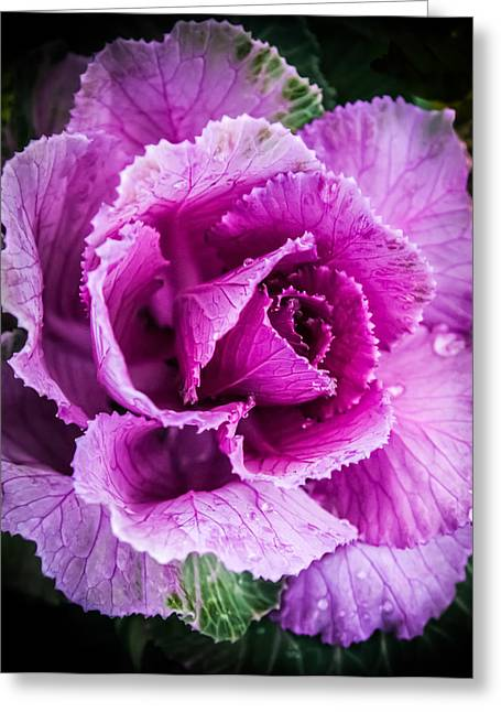 Edibles Greeting Cards - LOVE of LAVENDER Greeting Card by Karen Wiles