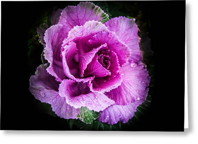 Deli Greeting Cards - LOVE of LAVENDER Greeting Card by Karen Wiles