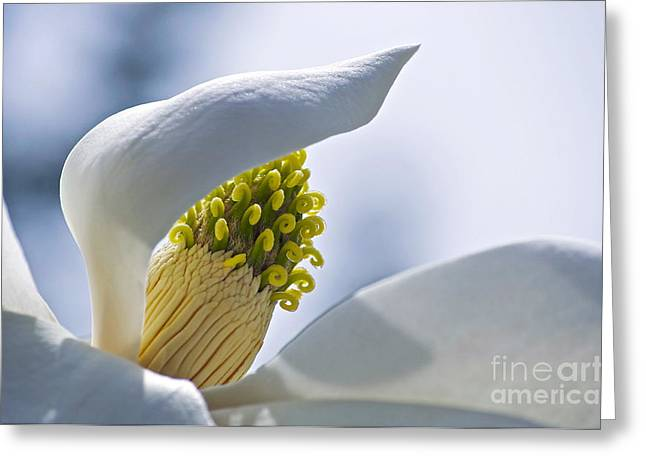 Dignity Greeting Cards - Love of Nature Greeting Card by Gwyn Newcombe