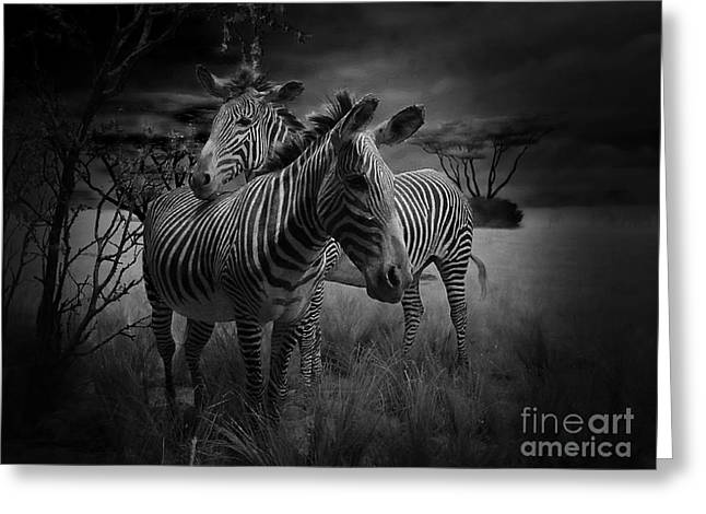 Zebra Picture Prints Greeting Cards - Love Season III - African Dream I Greeting Card by Xueling Zou