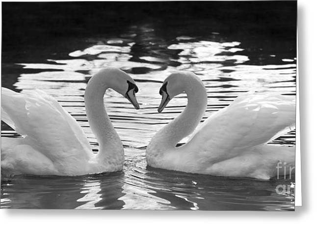 Love Swans Greeting Card by Brandon Alms