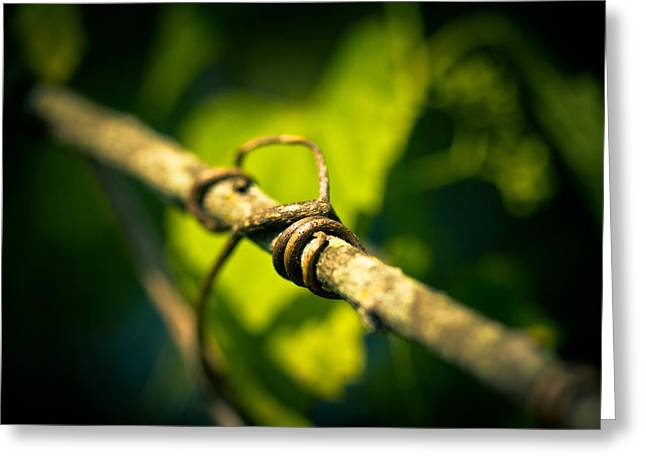 Vines Greeting Cards - Love Takes Hold Greeting Card by Shane Holsclaw