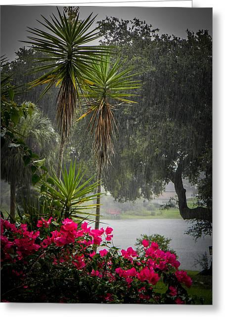 Bayonet Greeting Cards - Love the Rain  Greeting Card by Christy Usilton