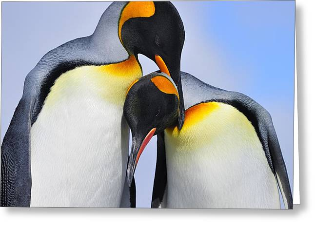 Bonding Greeting Cards - Love Greeting Card by Tony Beck