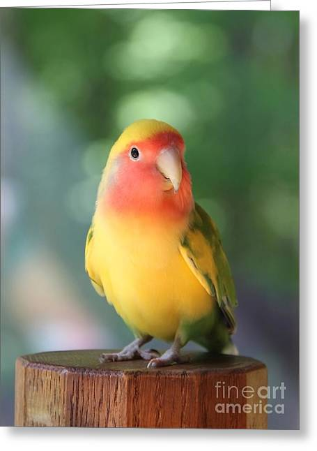 Peach-faced Lovebird Greeting Cards - Lovebird on a Pedestal Greeting Card by  Andrea Lazar