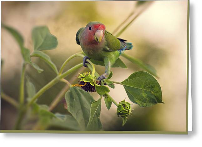 Lovebird On  Sunflower Branch  Greeting Card by Saija  Lehtonen