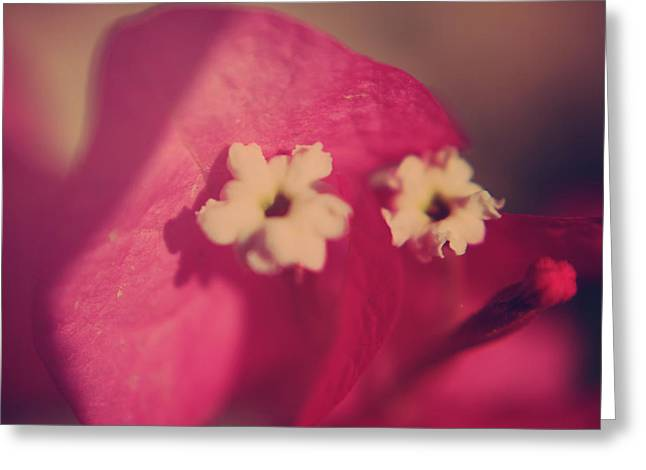 Flower Stamen Greeting Cards - Loved Greeting Card by Laurie Search