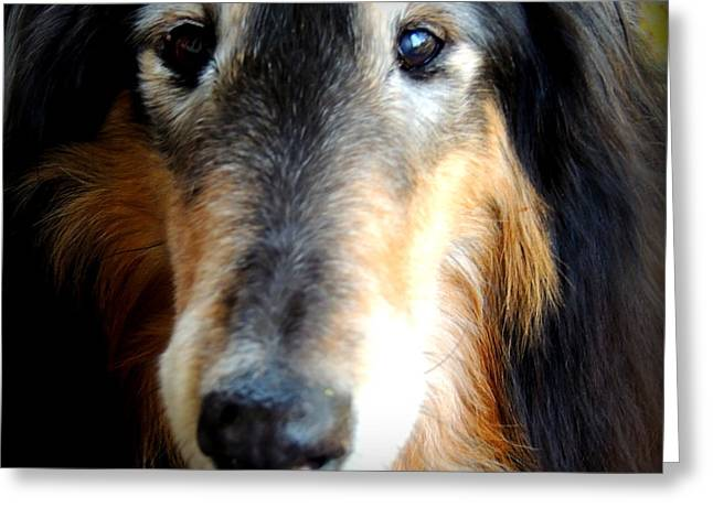 Senior Dog Greeting Cards - Loved Greeting Card by Rabiah Seminole