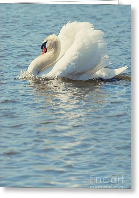 Lovely Bird Greeting Card by Svetlana Sewell