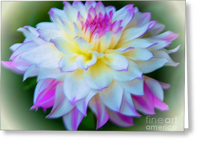 Struckle Greeting Cards - Lovely Dahlia Greeting Card by Kathleen Struckle