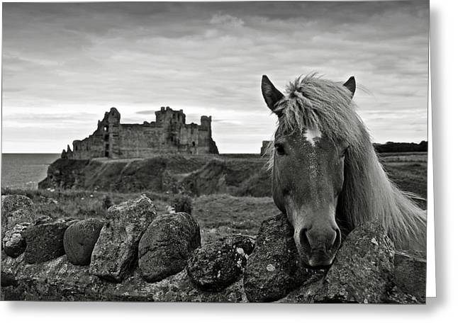 Sea Horse Greeting Cards - Lovely horse and Tantallon Castle Greeting Card by RicardMN Photography