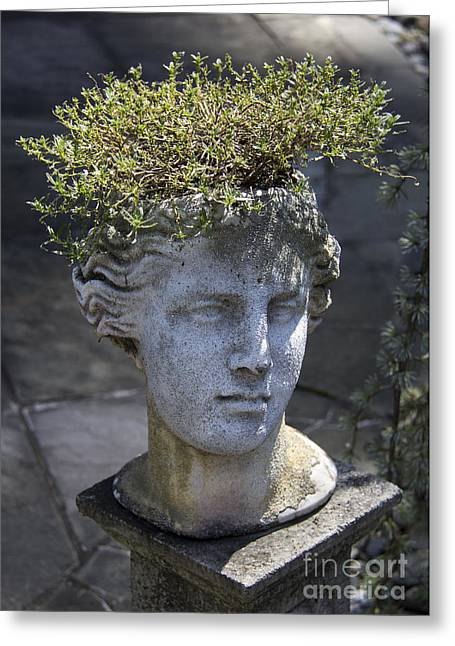 Concrete Planter Greeting Cards - Lovely Lady Greeting Card by Teresa Mucha