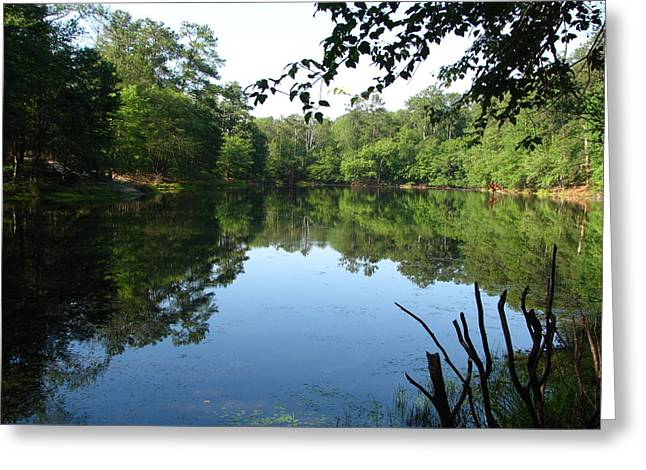 Trees Reflecting In Water Greeting Cards - Lovely Lake Greeting Card by Cleaster Cotton