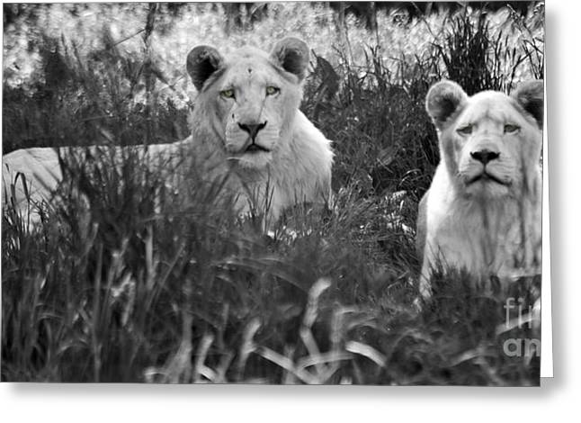 Lions Greeting Cards - Lovely Lions Greeting Card by Elaine Mikkelstrup