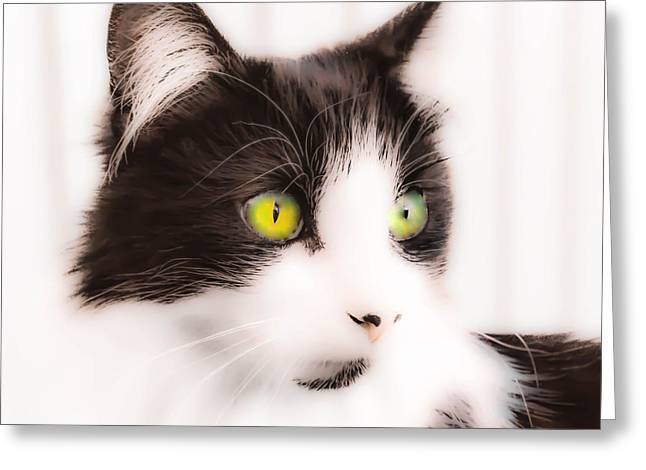 Over-exposed Greeting Cards - Lovely Little Kitten Greeting Card by Naomi Burgess