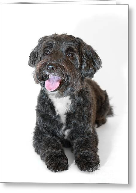 Lovely Long Haired Dog Greeting Card by Natalie Kinnear