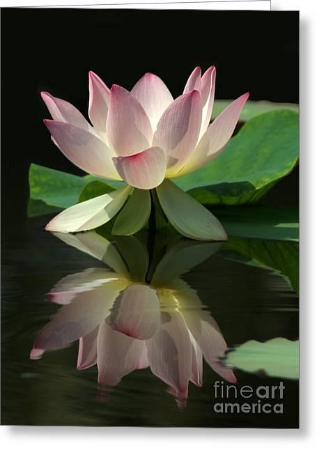 Lovely Lotus Reflection Greeting Card by Sabrina L Ryan