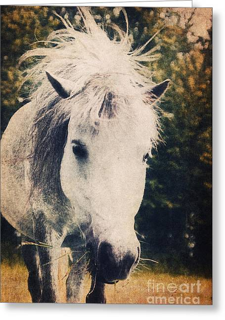 Horse Images Mixed Media Greeting Cards - Lovely Lulu Greeting Card by Angela Doelling AD DESIGN Photo and PhotoArt