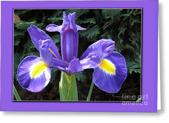 Shower Curtain Greeting Cards - Lovely Purple Iris 2 Greeting Card by  ILONA ANITA TIGGES - GOETZE  ART and Photography