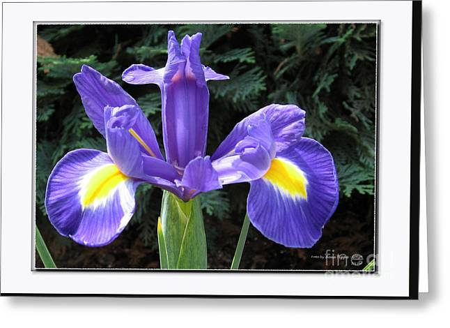 Shower Curtain Greeting Cards - Lovely Purple Iris Greeting Card by  ILONA ANITA TIGGES - GOETZE  ART and Photography