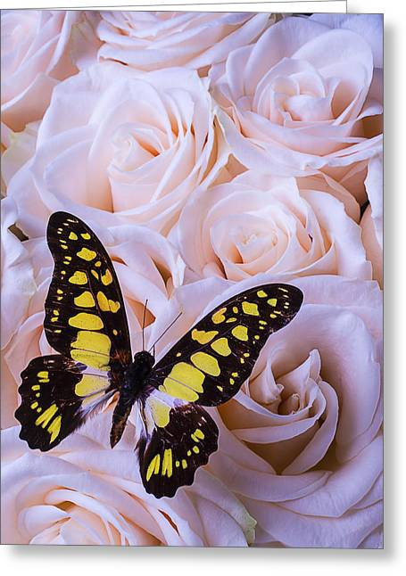 Blooms Butterflies Greeting Cards - Lovely Yellow And Black Butterfly Greeting Card by Garry Gay