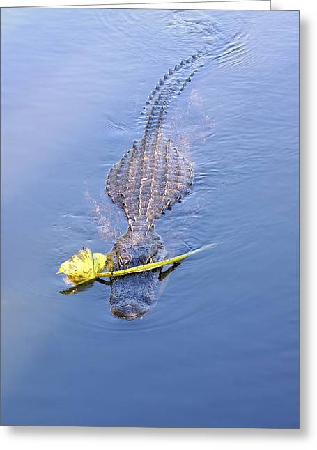 Bask Greeting Cards - Lover Boy Alligator  Greeting Card by Rudy Umans