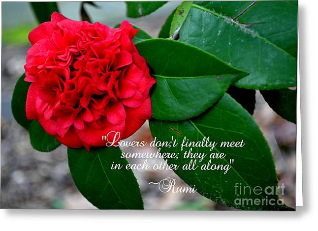 Whiteoaks Photography Greeting Cards - Lovers Dont-Rumi Greeting Card by Eva Thomas