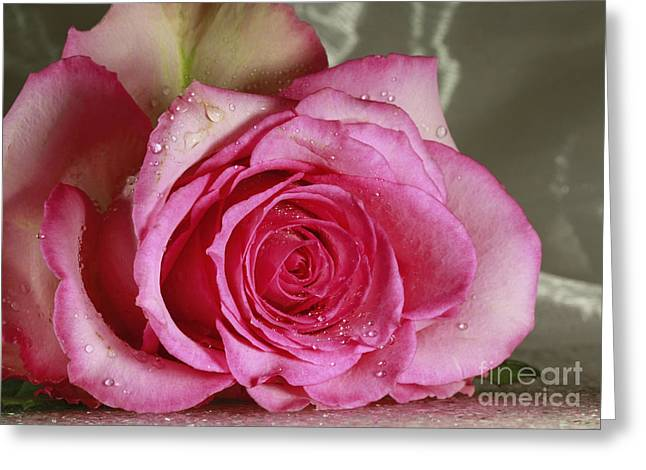 Loves Tender Moments Greeting Card by Inspired Nature Photography By Shelley Myke