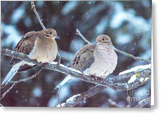 Morning Dove Photograph Greeting Cards - Lovey Dovey Greeting Card by Cheryl Baxter