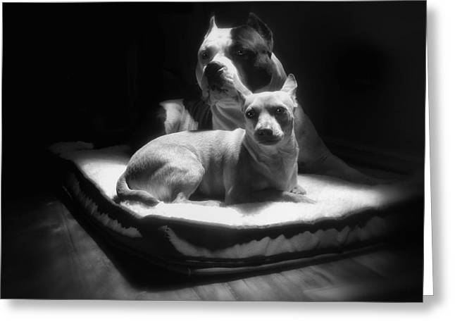 Dog Photographs Greeting Cards - Loving Friends 1 Greeting Card by Larry Marshall