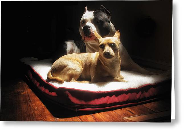 Dog Photographs Greeting Cards - Loving Friends Color Greeting Card by Larry Marshall