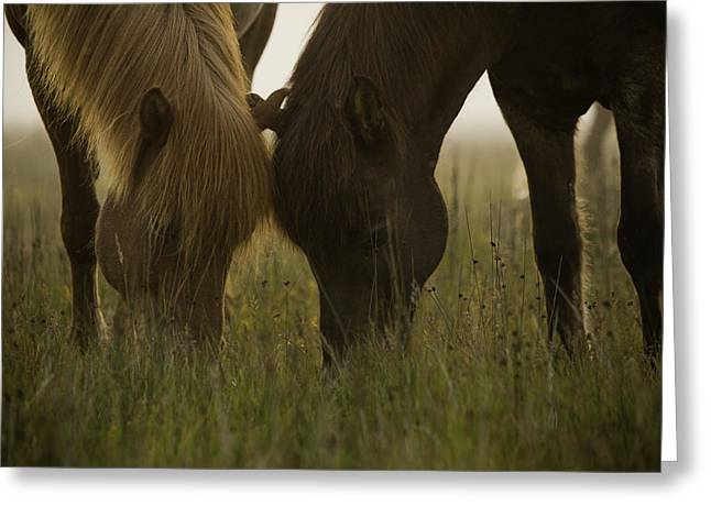 Equus Ferus Greeting Cards - Loving horses Greeting Card by Ruben Vicente