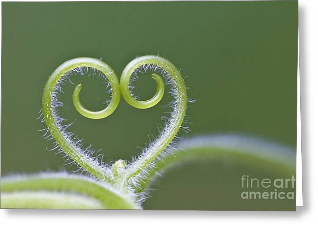 Loving Nature Greeting Card by Maria Ismanah Schulze-Vorberg
