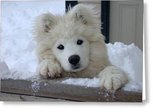 House Pet Greeting Cards - Loving The Snow Greeting Card by Dana Bechler