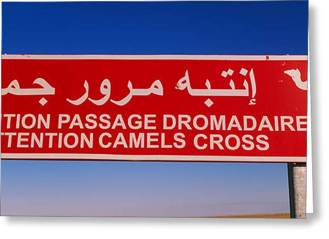 Tunisia Greeting Cards - Low Angle View Of A Camel Crossing Greeting Card by Panoramic Images
