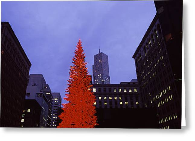 Downtown District Greeting Cards - Low Angle View Of A Christmas Tree, San Greeting Card by Panoramic Images