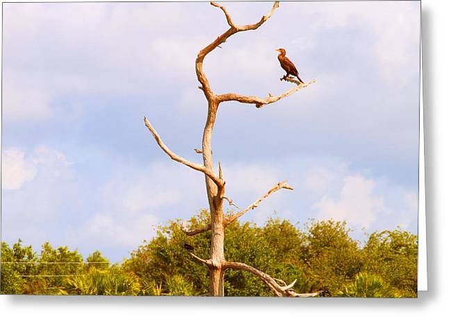 Cormorants Greeting Cards - Low Angle View Of A Cormorant Greeting Card by Panoramic Images