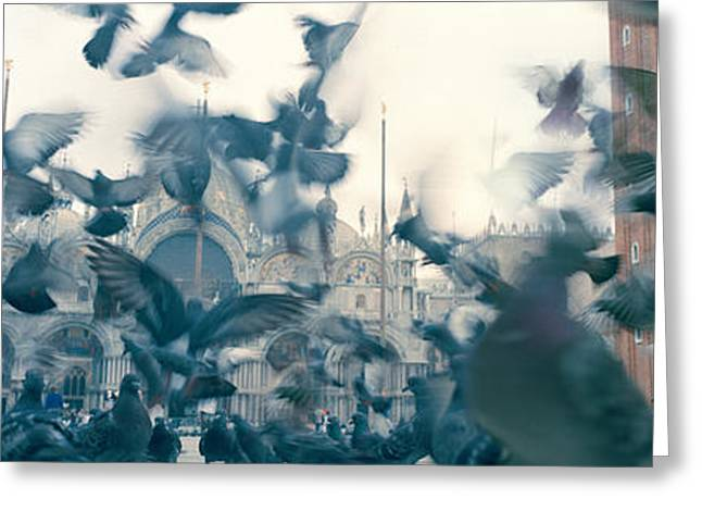 Flock Of Bird Greeting Cards - Low Angle View Of A Flock Of Pigeons Greeting Card by Panoramic Images